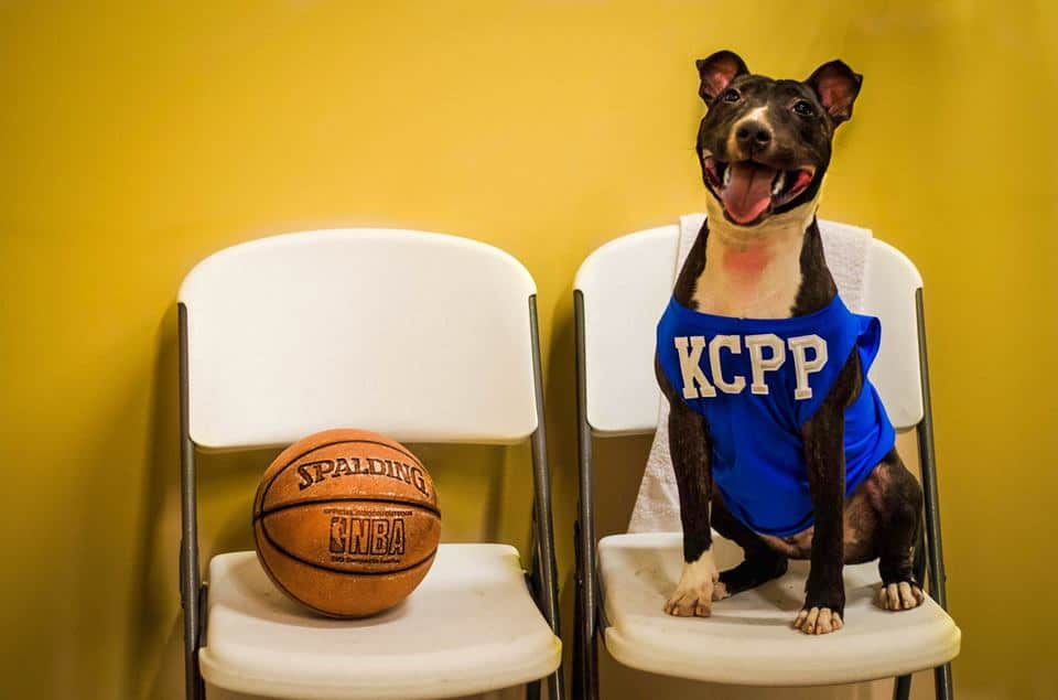 kcpetproject